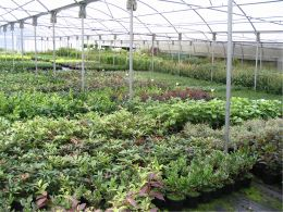 Albion Plants - polytunnel